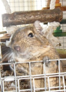 Always inquisitive and at the cage door looking for any tasty treat