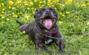 That's what we call a staffie smile