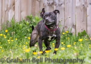 Millie is an energetic girl