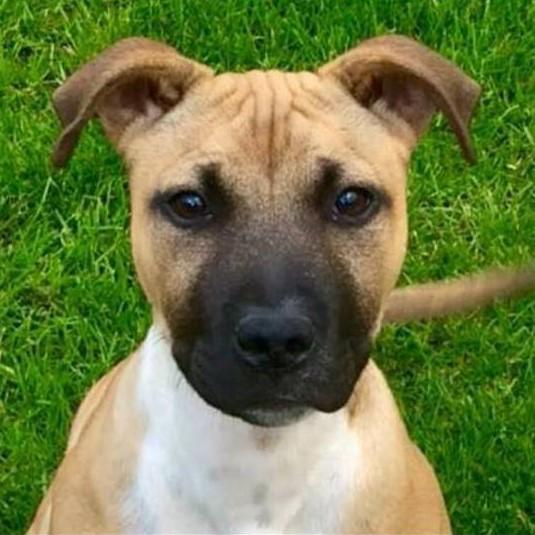Dog Kennels Berwick