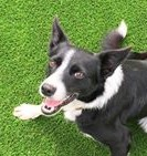K Dog Training Berwick