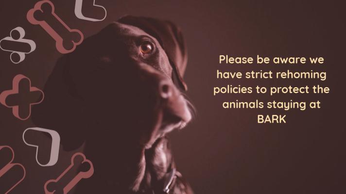 BARK Protect