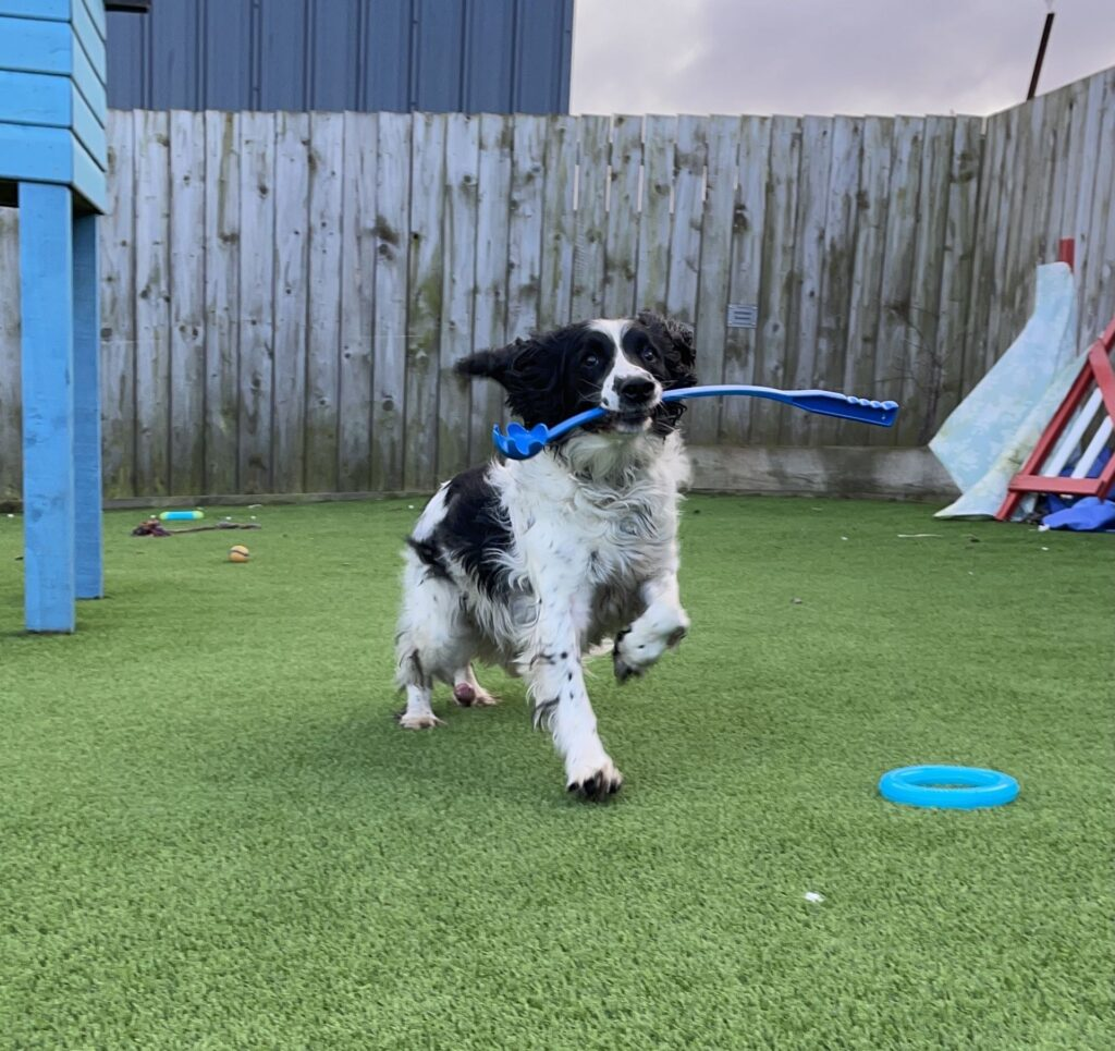 Alfie will play with just about anything that he thinks is fun