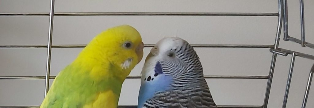 Petra & Bobbi (2)