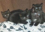 Huberts, Colin, Wiggles, Charlie & Calli